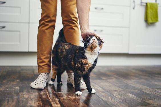 benefícios pets para a saúde