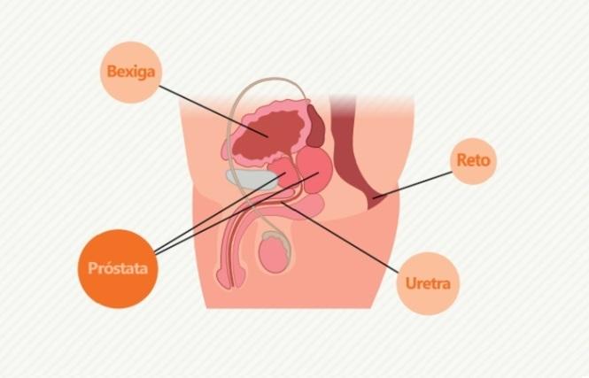 localização da próstata
